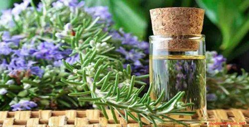 cilde faydalı bitkisel yağlar; Cildimiz İçin Faydalı 5 Bitkisel Yağ; en faydalı bitkisel yağlar; faydalı bitkisel yağlar; saça faydalı bitkisel yağlar;