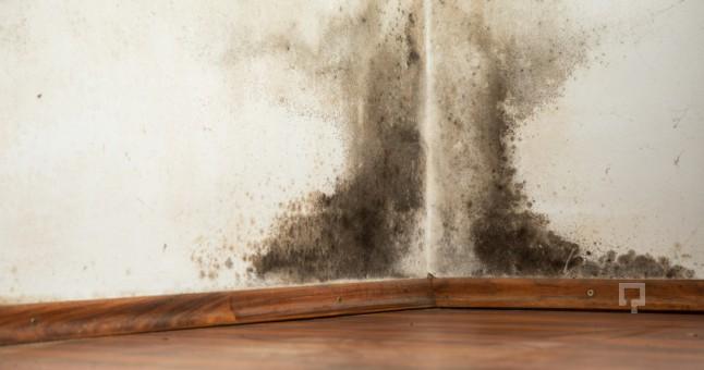 Duvar küfü temizleme