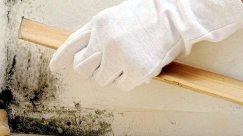 Duvar küfünü temizleme yolları