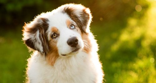 köpek bakımı